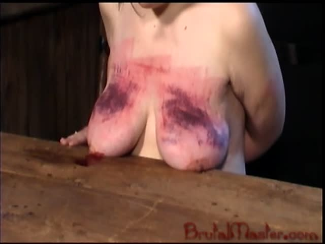 20081106_cow_udders_1_ (image 1)-6,