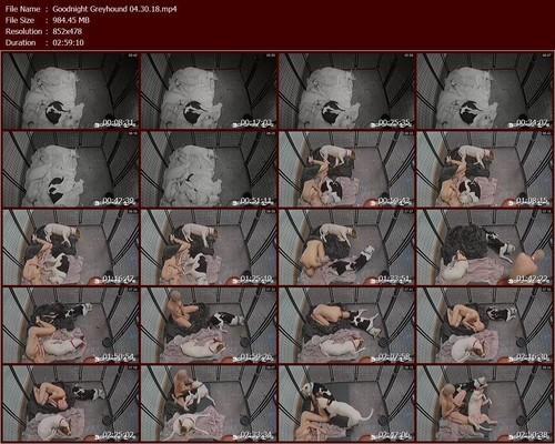 Goodnight%20Greyhound%2004.30.18.t_m.jpg