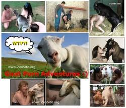 http://ist5-1.filesor.com/pimpandhost.com/1/_/_/_/1/6/u/a/3/6ua3K/GoatSex_s.jpg