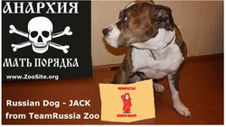 Jack s - Russian Dog Jack - Best Videos From Dog porn Star