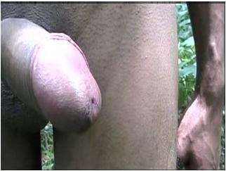 http://ist5-1.filesor.com/pimpandhost.com/9/6/8/3/96838/5/N/l/L/5NlLO/Extreme-gayboys186_cover.jpg