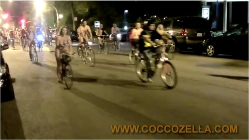Coccozella075_cover_m.jpg