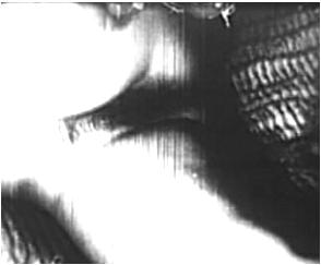 http://ist5-1.filesor.com/pimpandhost.com/9/6/8/3/96838/6/p/9/r/6p9rD/VintageCuties-h116_cover.jpg