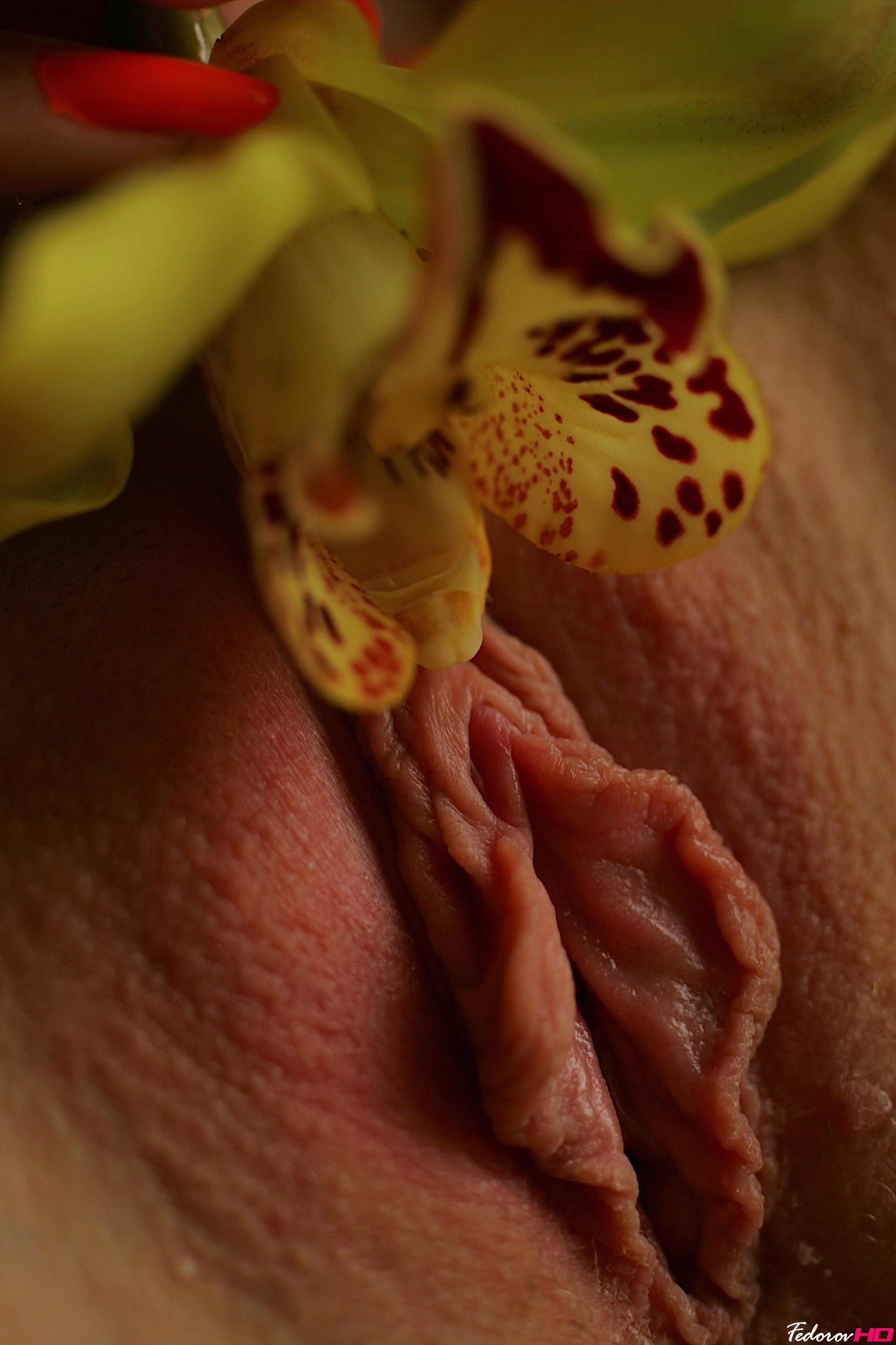 Vulva And Vagina