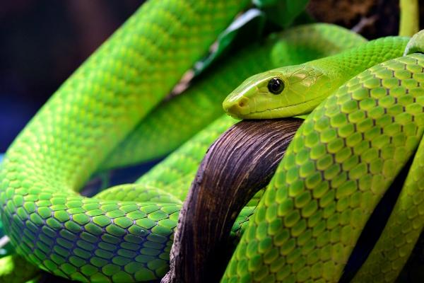11-GreenMamba,