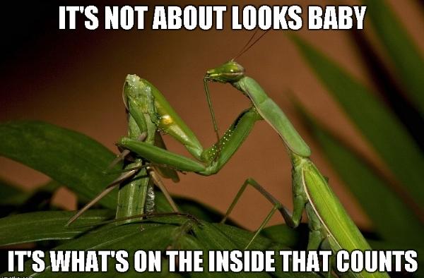 Mantis1,