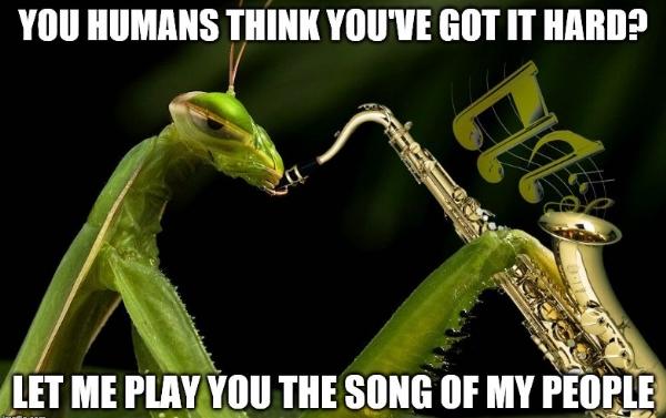 Mantis3,